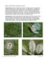 Plant pest fact sheets