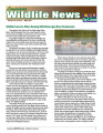 Louisiana wildlife news