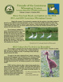 Friends of the Louisiana Whooping Cranes Newsletter